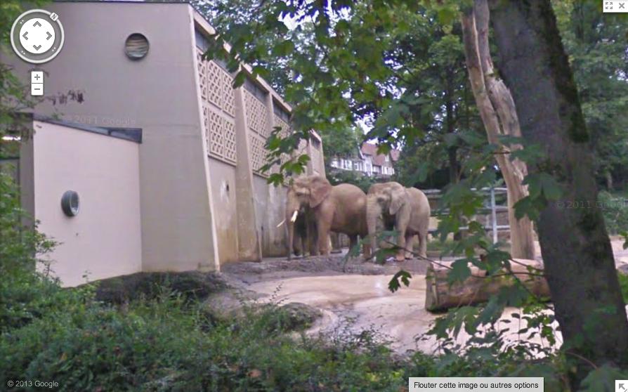 Bâle, Suisse, éléphants