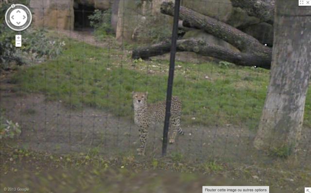 Bâle, Suisse, léopard