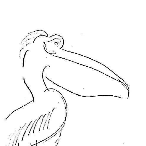 le Pelikan